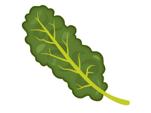 cartooned image of kale